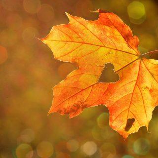 Podzimní hrušně