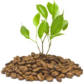 Hnojiva a postřiky