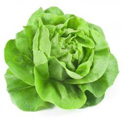 Přísady-saláty, kedlubny, květáky...